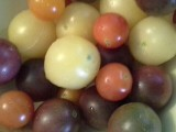 An Assortment of Colorful and Flavorful Cherry Tomatoes, Summer 2013